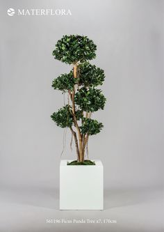 Ficus Panda #trees #plants #artificialtrees #artificialplants #homedecor #decorideas #materflora