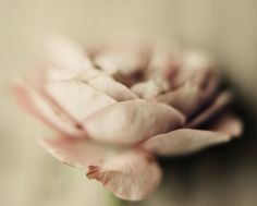 """""""Rose"""" print from dullbluelight via Etsy - Truly amazing macro work, go check it out!"""