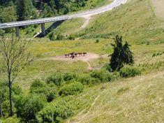 Country Roads, Animals, Animales, Animaux, Animal, Animais