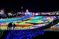 Image result for 東京ドイツ村 Chiba prefecture. Has a winter light up