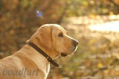 My dog 'nice' / pics by boad