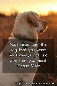A beautiful dog quote