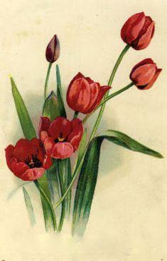 free printable red tulips  tulips = true love