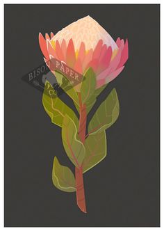 Modern & Simple Blank Illustrated King Protea by BisonPaperCompany Botanical Illustration, Illustration Art, Illustrations, King Protea, Cubism, Office Ideas, Tattoo Inspiration, Gardens, Wisdom