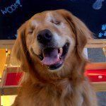 Dutchess the Therapy Dog on Instagram