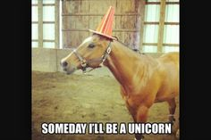 I like funny horse quotes