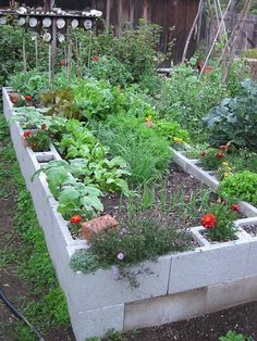 Raised garden bed with concrete blocks-lasts longer than wood. One can also opt to paint or stain the blocks some viberent colors. Fill the holes in the blocks with soil and grow pest fighting flowers alternating with bunch or green onions. The filled blocks are much more stable against the pressure of the soil inside the raised garden bed.