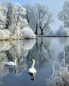 New Photography Nature Landscape Winter Ideas Winter Pictures, Nature Pictures, Cool Pictures, Holiday Pictures, Winter Photography, Landscape Photography, Nature Photography, Reflection Photography, Photography Series