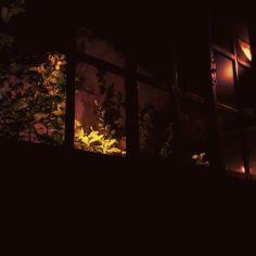 I #miss you at #night  #window #plants #view #gentle #sense