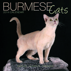 Unusual Cat Breeds or different kinds of cats. There so many different adjectives are used for describing these creatures, but some cats look very weird. Cat Calendar, Wall Calendars, Kinds Of Cats, Large Format, Burmese, Cat Breeds, Photographs, Creatures, Contemporary