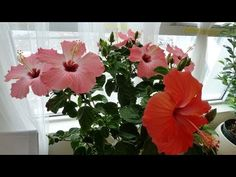 How to braid a plant (hibiscus) - YouTube