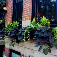 Neighbors' window boxes.