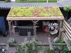 sedumdak veranda