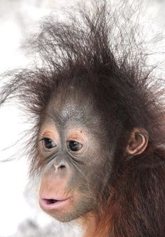 Visiting ZOO can be very interesting. Some animals are so funny :) We are bringing to you a compilation about funny ZOO animals. Zoo Animals, Cute Baby Animals, Animals And Pets, Funny Animals, Monkey Pictures, Funny Animal Pictures, Primates, Beautiful Creatures, Animals Beautiful