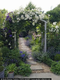 Arch with Rosa Wedding Day and Clematis Jackmanii. Path of paving stones set in gravel leads to gate. In beds: Rosa Ballerina, catmint, box, Stipa gigantea. Agapanthus in pot