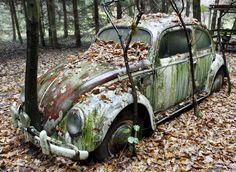 Een oude Volkswagen Kever nabij Kassel in Duitsland. De eigenaar parkeerde in 1991 de auto in zijn tuin en plantte er bomen omheen.