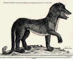 Next Burma mentions briefly the Beast of Gévaudan, a man-eating wolf, dog, or wolf-dog hybrid that terrorized the Margeride Mountains in south-central France between 1764 and 1767. Dozens of youngsters were attacked and killed by the beast. The best account in English is Jay M. Smith, Monsters of the Gévaudan (Harvard University Press, 2011).