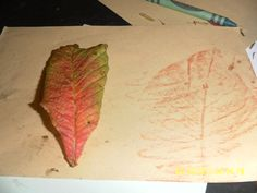 Notice the detail in the patterns when leaf rubbing