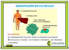 Organización+de+las+células.