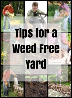 tips for a weed free yard - use these tips to banish weeds from your yard once and for all.
