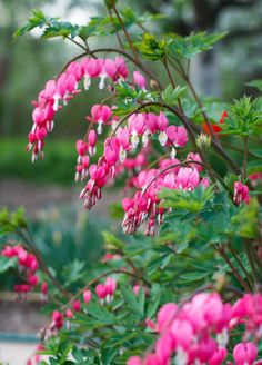 18 Low Maintenance Perennials