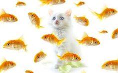 goldfish goldfish food food
