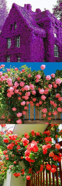 Egrow Perfume Climbing Plants Colorful Rock Cress Flower Seeds is fashionable and cheap, come to NewChic to see more trendy Egrow Perfume Climbing Plants Colorful Rock Cress Flower Seeds online. Dream Garden, Garden Art, Climbing Flowers, Garden Seeds, Flower Seeds, Garden Projects, Garden Inspiration, Style Inspiration, Pretty Pictures