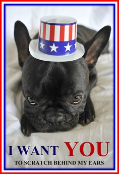 """I want YOU! too scratch behind my ears!"", a very Patriotic French Bulldog, #frenchies"