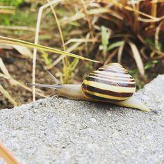 Snailheid, ik bedoel #snelheid (of juist het gebrek aan) #synchroonkijken