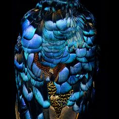 Feathers detail by Mark Laita