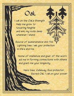 Oak Poster.  The Oak Poster celebrates the sacred nature of the Oak tree, which has long been celebrated as mystical and divine and even as a gateway to the fae. - See more at: http://www.azuregreen.net/Oak-Poster/productinfo/EPOAK/#sthash.sAMTL6UA.dpuf