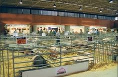 Sepor reúne en Lorca a 500 expositores del sector porcino