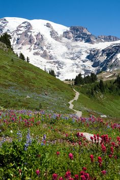 My husband and I just hiked this amazing trail. Mt Reiner is easily one of my favorite hikes! Beautiful Nature Scenes, Beautiful Landscapes, Beautiful World, Columbia River Gorge, Wonderful Places, Beautiful Places, Landscape Photography, Nature Photography, Dame Nature