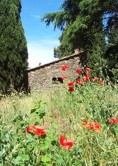 Poppies around a Cortona cottage of years ago....
