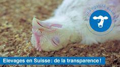 Les labels représentent un outil commercial crucial pour l'industrie alimentaire utilisant des produits d'origine animale. Leur apposition permet d'étiqueter un produit comme « éthique » et d'en augmenter grandement la vente. Malheureusement, ils constituent souvent de simples promesses dont il est...