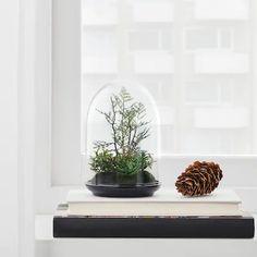 INVÄNDIG Kunstecodome, stolp - IKEA Decor Terrarium, Ikea Sortiment, Flower Silhouette, Ikea Family, Best Ikea, Terraria, Glass Boxes, Artificial Plants, Indoor Plants