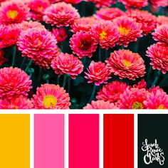 Explore the colors of nature with these 25 color palettes inspired by flowers, bouquets and gardens. Floral color inspiration for wedding color palettes or flower arrangements and more. Spring Color Palette, Nature Color Palette, Colour Pallete, Spring Colors, Color Palettes, Yarn Color Combinations, Color Schemes, Small Flowers, Colorful Flowers