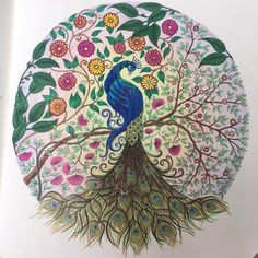Lindsey Fernandes Coloring The Peacock Page From Secret Garden By Johanna Basford