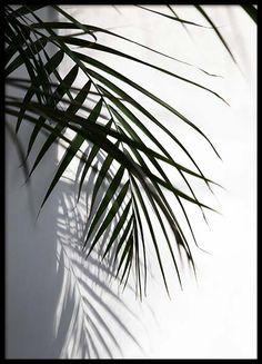 Fotokunst med svarthvite fotografier | Desenio.no