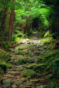 Great Smoky Mountains National Park hiking trail in North Carolina