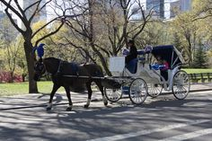 buggy ride through Central Park, NYC