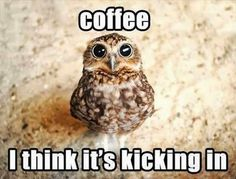 This is the moment of every day I live for Animals coffee meme hilarious animal pic lol funny photos Funny Owls, Funny Animal Jokes, Cute Funny Animals, Funny Animal Pictures, Animal Memes, Cute Baby Animals, Funny Cute, Funny Memes, Animal Humor