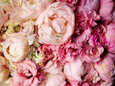 Todo con las flores: decorar, crear, degustar, cuidar...................: Peonias de nuestra vida