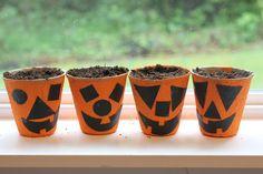 Pumpkin Starter Seed Cups