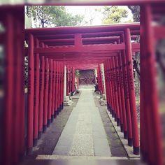 Shrine gates at Tomioka Hachimangu. #tokyo #japantravel #shrine