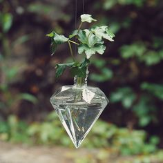 Hydroponics clear glass hanging vase