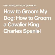 How to Groom My Dog: How to Groom a Cavalier King Charles Spaniel