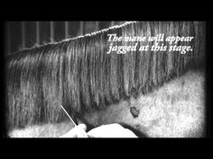 I don't show anymore and so I don't pull manes, don't shave hears or touch their whiskers. If you don't want to take care of a long mane but don't want tot pull this is a great video. 'How To Cut a Mane Like a Pro In 7 Steps - Horse Collaborative'