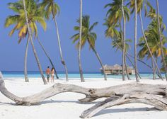 TripAdvisor just published their 2015 Travelers' Choice Awards and Gili Lankanfushi, Maldives was named the hotel in the world. Moon Beach, White Sand Beach, Palm Beach, Villas, Gili Lankanfushi, Luxury Beach Resorts, Overwater Bungalows, Maldives Resort, Honeymoon Packages