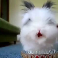 Rabbit Eating, Cutest Animals, Raspberries, Rabbits, Farm Animals, Random Things, Bunnies, Creatures, Actors